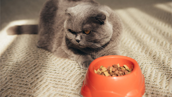 best high fiber cat food
