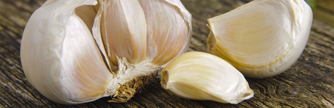 garlic-for-dogs