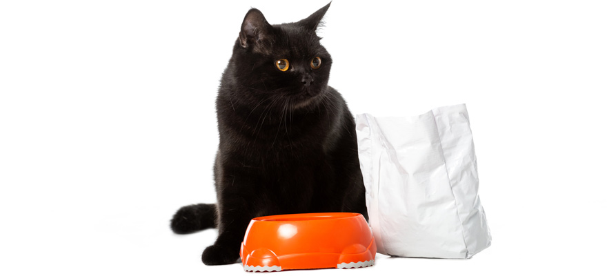 high fiber food for cats