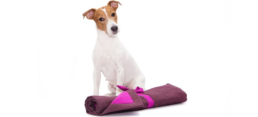 The Best Area Rugs For Dogs Review In 2019 My Pet Needs That