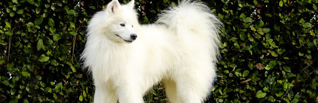 oldest dog breeds in the world