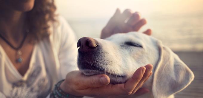 owner caressing dog