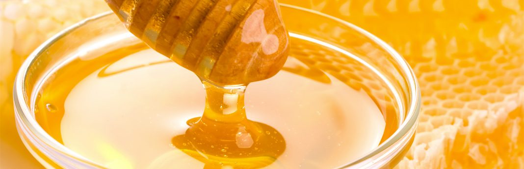 powerful healing benefits of honey for your dog