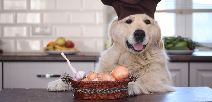 retriever with onions and garlic
