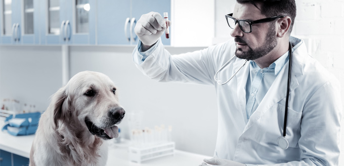 titer test for canines