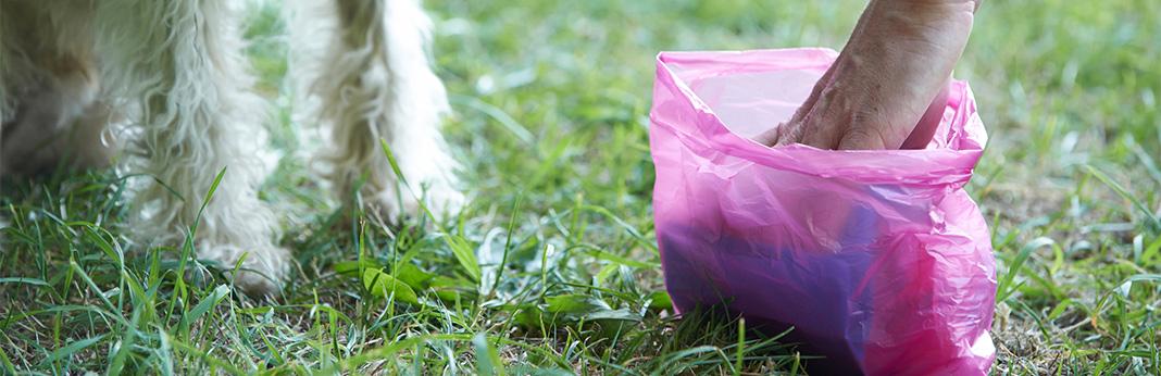 10-ways-to-pick-up-dog-poop