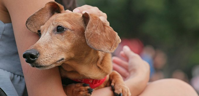 Pet owner hugging Dachshund dog at outdoor