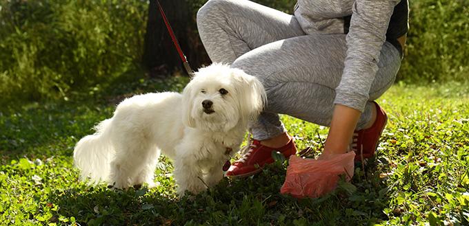 Woman gathering dog poo