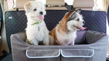 best car seats for dogs