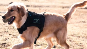 best tactical dog vests