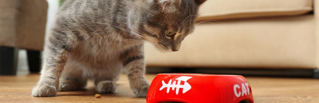 do cats need fier in their diet
