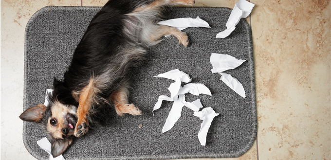 dog eating paper