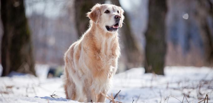 5种常见的冬季健康危害因素| 我的宠物需要那个