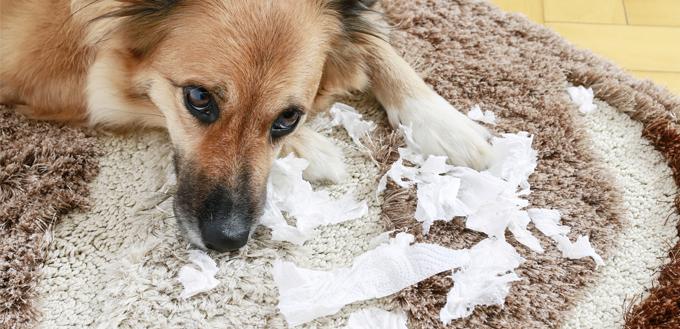 dog made a mess