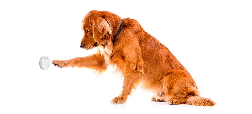 dog with doorbell