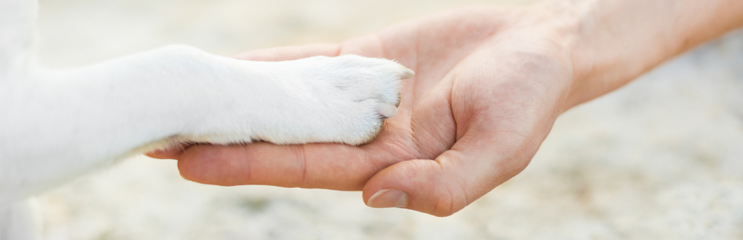 facts-about-dog-paws