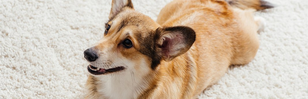 how-your-dog's-behavior-can-change-with-age
