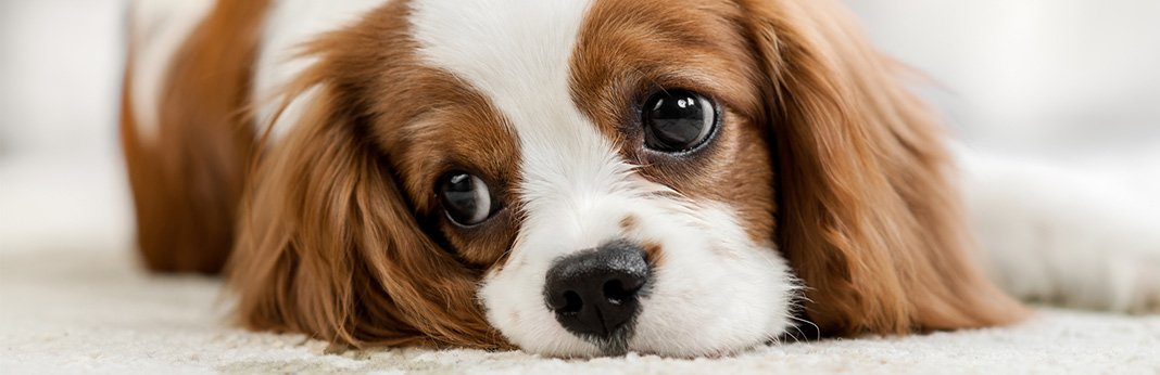 tips-&-tricks-to-make-being-home-alone-less-stressful-for-your-dog