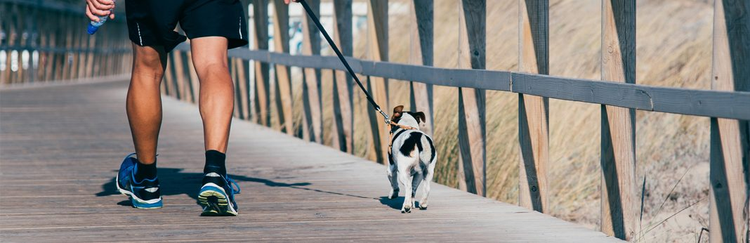 turn walking the dog into a workout