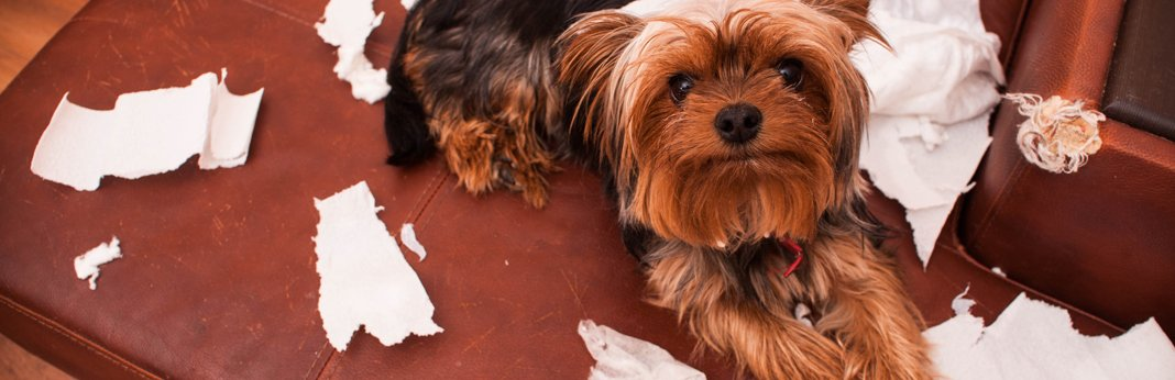 why-dogs-eat-paper