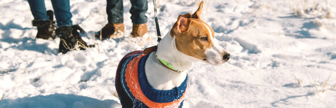 winter health hazards for dogs