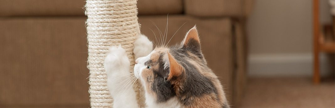 5 Home-Remedy Ideas for Cat Scratch Treatment