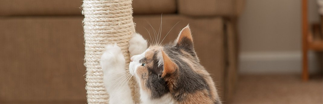 5-Home-Remedy-Ideas-for-Cat-Scratch-Treatment