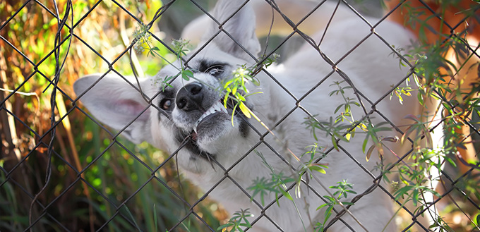 Angry dog in a steel cage