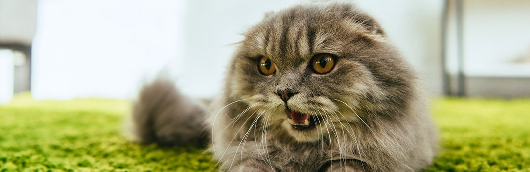 Cat-Yowling-Why-Do-Cats-Yowl-and-What-Does-It-Mean