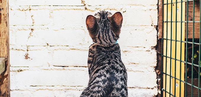 Cat sitting looking at a brick wall