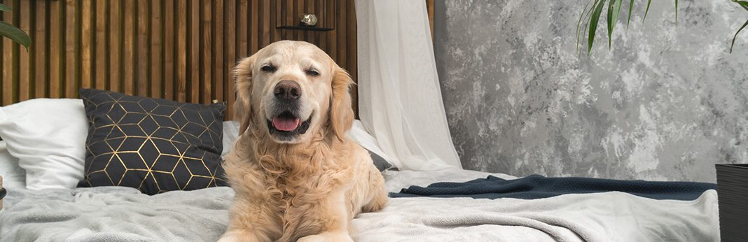 Sharing a Bed with Your Dog