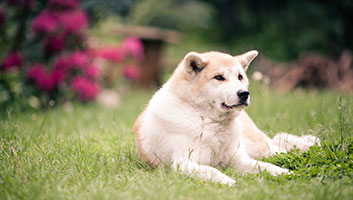 The Best Supplements For Older Dogs