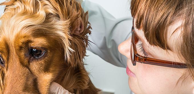 你应该为你的狗做的10件事情 我的宠物需要那个