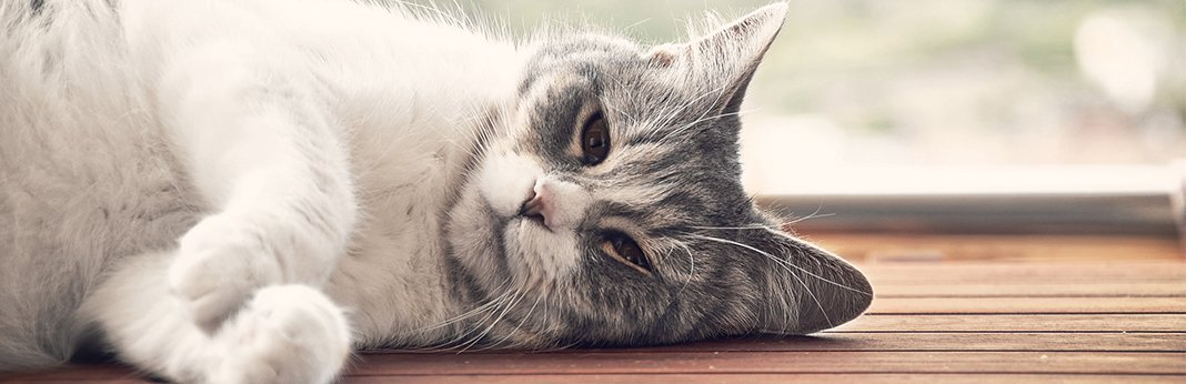 What-Causes-Watery-Cat-Eyes