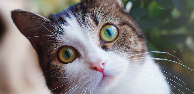 Cat Pupils Here S What Your Cat S Eyes Are Telling You