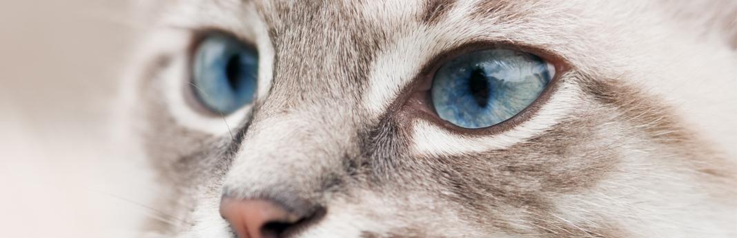 cat-pupils