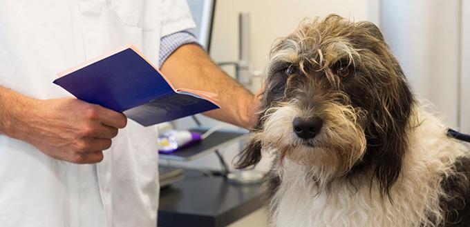 dog-passport