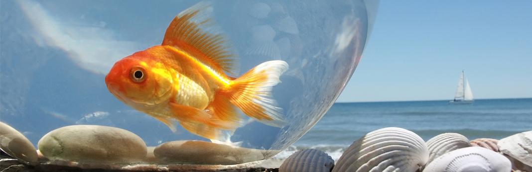 goldfish lifespan