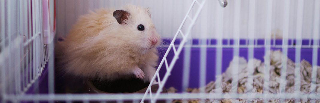 how to potty train your hamster