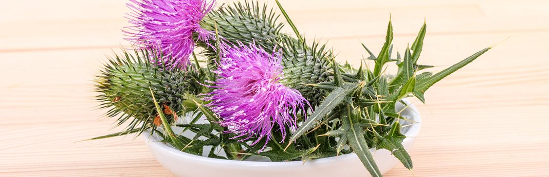 milk thistle for dogs