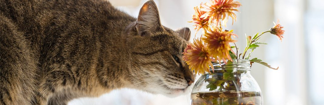scents that cats hate