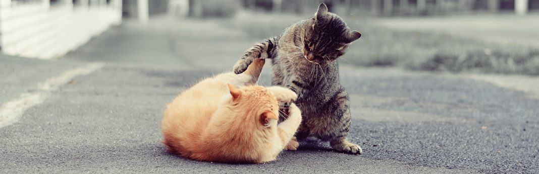 stop cat fight