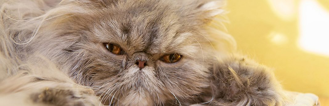 ways to help your cat through a grieving period