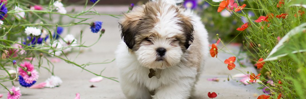 what-is-small-dog-syndrome-and-how-to-deal-with-it