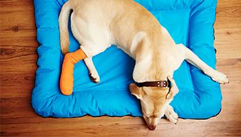 Best Dog Knee Braces