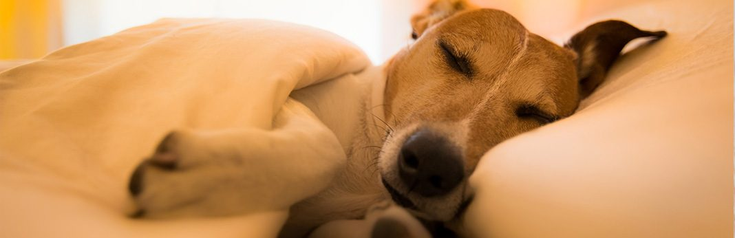 Common Dog Sleeping Positions and What They Mean
