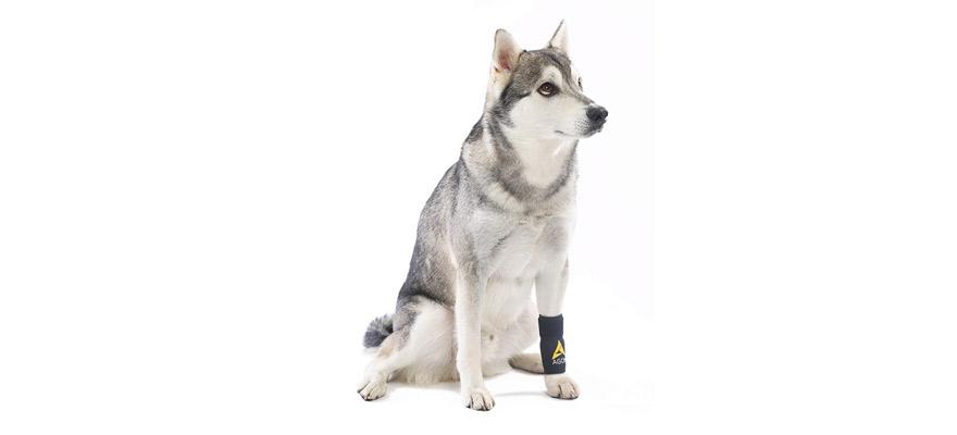 Dog Canine Front Leg Brace
