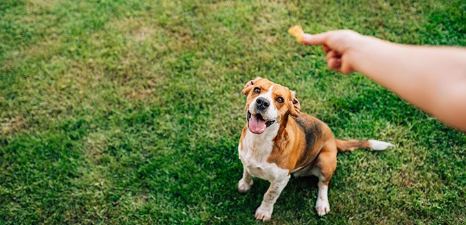 Hand of woman feeding happy dog with treats