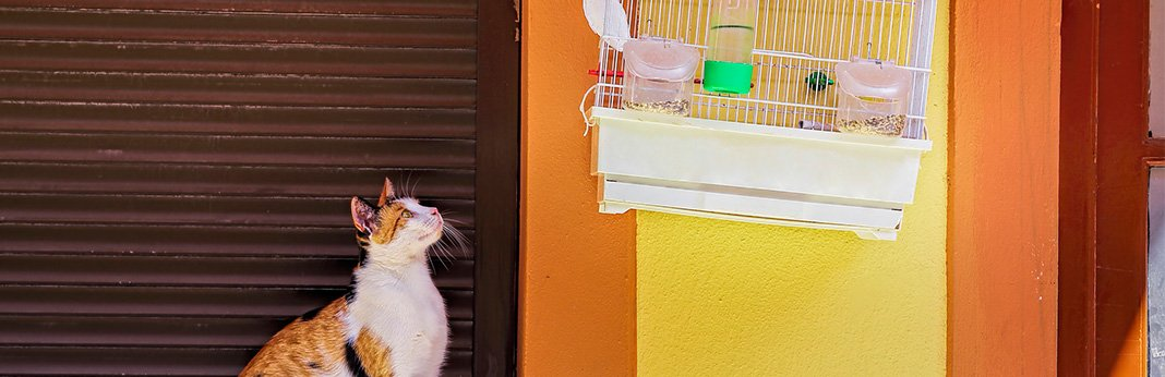 How-Can-I-Teach-My-Cat-Not-to-Eat-My-Bird