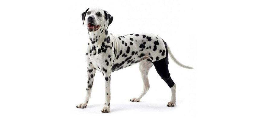 Knee Protector for Dogs